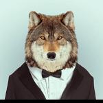 Illustration du profil de Falquiero